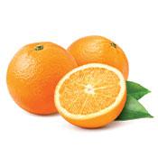 Orange Navel Valencia