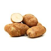 Potato Russett